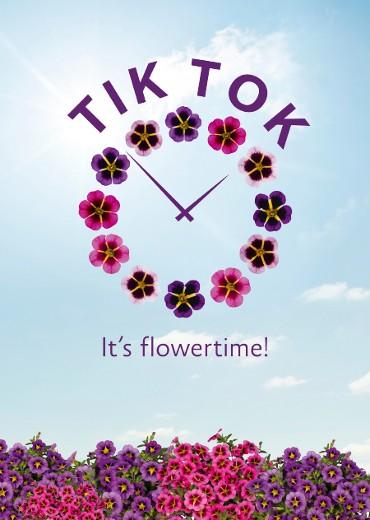 It´s flowertime!