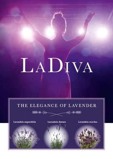 The elegance of lavender