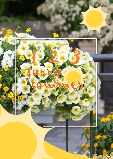 The Sunny Summer concept makes it easy to find the right combination for an appertising point of sale, for your bedding plants.