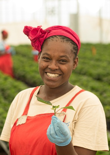 Fairtrade Potplants are produced by certified producers on request. Only Fair Trade-produced plants can be sold with the Fairtrade label