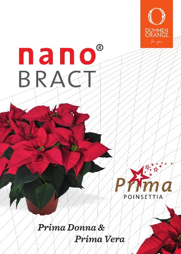 NanoBract varieties are easier to transport and stand up well to retail conditions.
